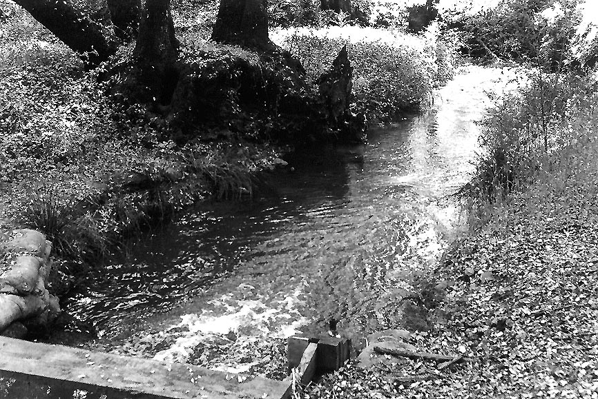 Brook3-BW