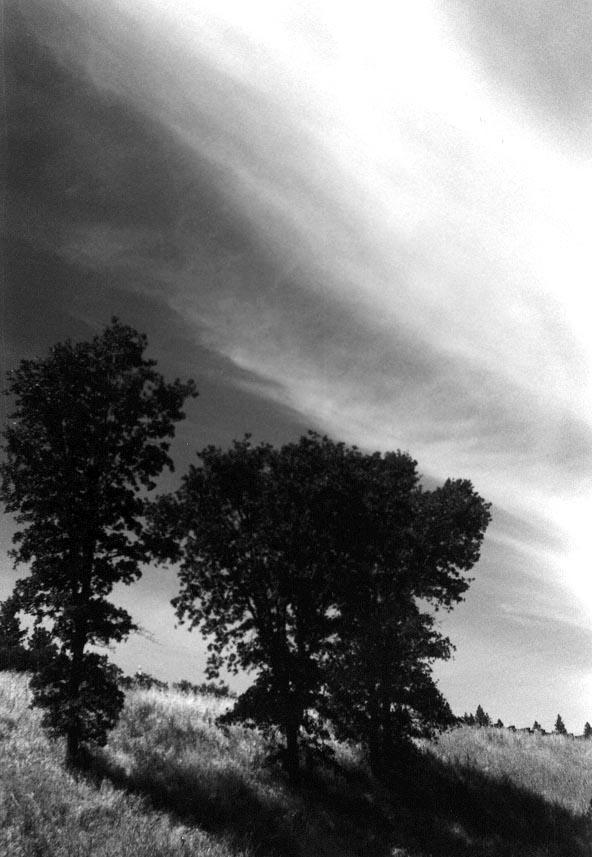 Landscape2-BW