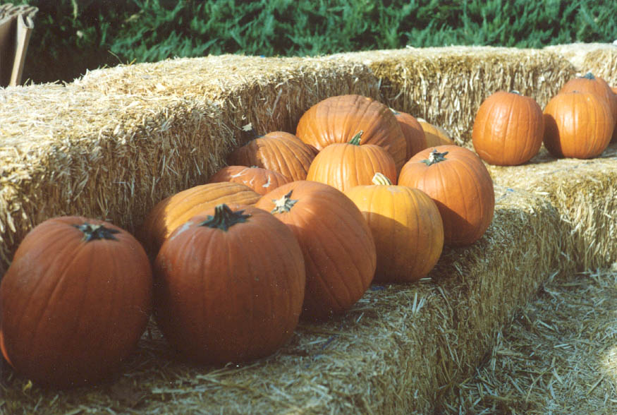 Pumpkinline